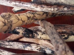 Driftwood detail