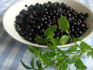 bowl of scrummy bilberries