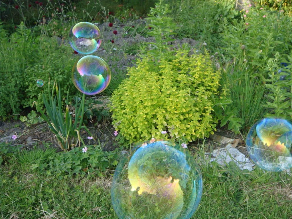 blog bubbles in herbs